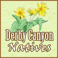 You are currently viewing Derby Canyon Natives