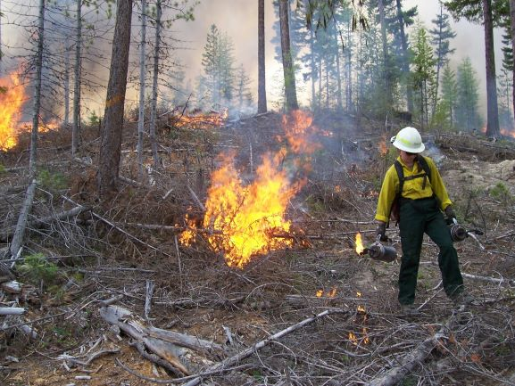 You are currently viewing Prescribed Fire, Controlled Burning – What you Need to Know